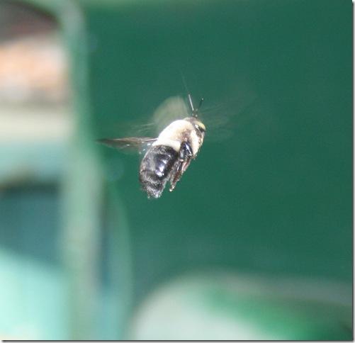 Bee2Med