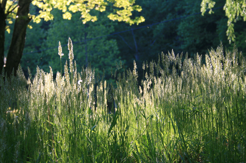 Green Grass on Paint Creek TN